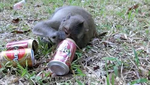这些动物居然也会酗酒和吸毒,究其原因居然是这个