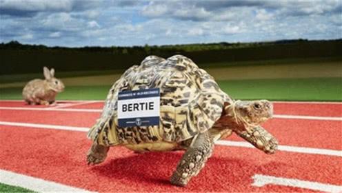 """世界上爬行最快的乌龟,号称""""龟界博尔特"""",网友:厉害了"""