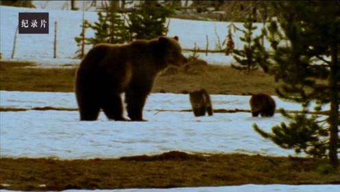 熊孩子长成记之一波三折!熊妈独自抚养两熊娃不容易!