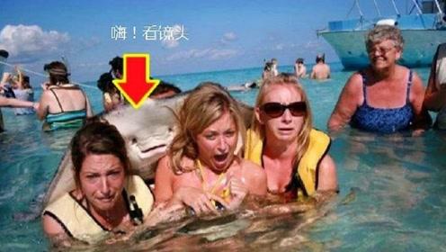 加勒比海中此鱼泛滥成灾,危险系数很高,游客却能和它玩得非常高兴