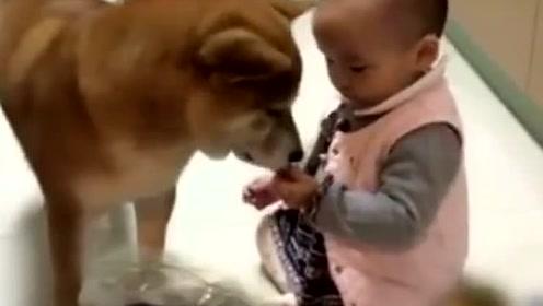 狗狗饿了,小宝宝偷偷去厨房拿零食给它吃,这配合太默契了!