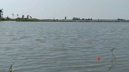 周日去湖边,岸上好多人呀,白色伞下那些人都在做一件事!