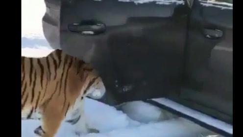 这位车主有话好好说,八达岭动物园了解一下?