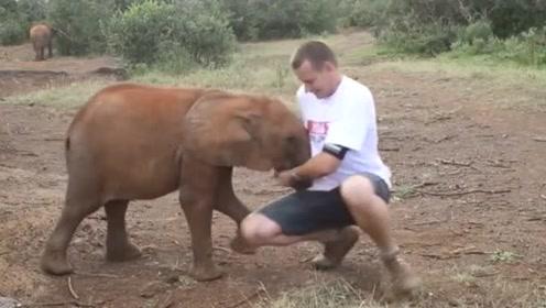 保育人士拍宣传片 不料调皮小象不停以鼻推搡抢镜