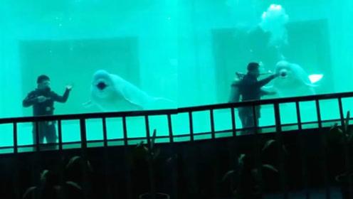 传说中的海豚音,最后biu一下简直不要太皮!
