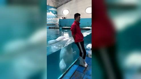 好有爱的海豚和主人亲密互动!