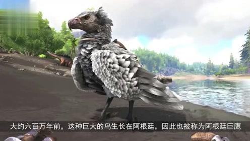 世界上最大的鸟!翼展超过7米,70公斤的大鸟你见过吗?