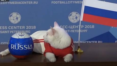 继世界杯预言帝保罗后 冬宫猫萨马拉山羊预言新秀哪家强?