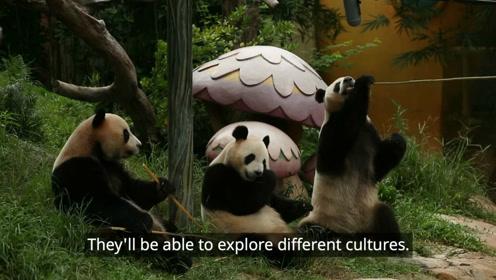 我的世界 为我的世界记录熊猫的声音