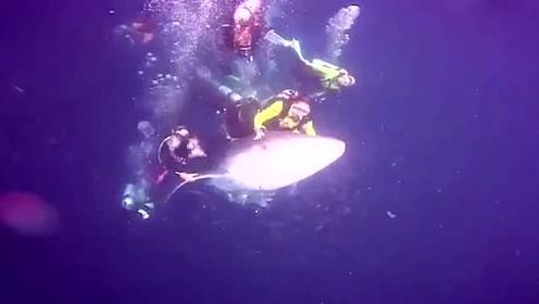 潜水员骑在濒危鲸鲨背上玩耍 引网友愤怒遭逮捕_01