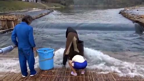 日本一劳永逸的捕鱼方法,杀鸡取卵!