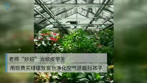 """老师""""妙招""""治顽皮学生 用班费买绿植放窗台净化空气还能挡孩子"""