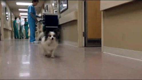 此小狗在《毒液》中的演技真是当之无愧的巅峰,这段值两个小金人!