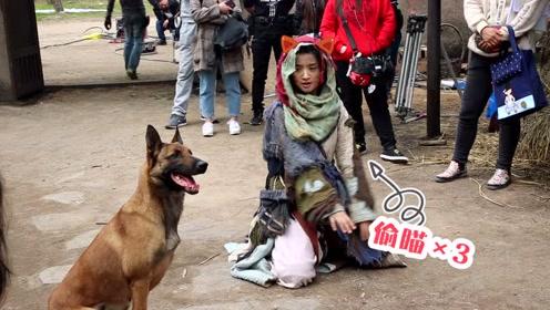 林依晨与狗不得不说的故事