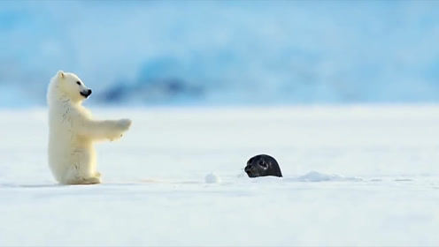 海豹路过从冰下露个头,小熊仰面倒了下去,吓到本宝宝了