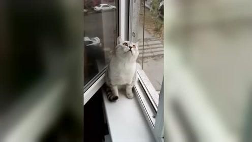 男子网上控诉养了一只假猫,网友:你的猫正在系统更新!