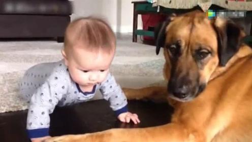 五个月宝宝趁妈妈不注意,咬了狗狗一口,接下来的小模样太可爱了!