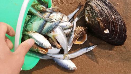 台风终于停了,小伙赶海狂捡海浪冲上来的鱼!人生已经达到巅峰