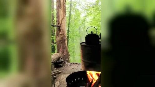 树林里绿意盎然,温一壶茶水日子悠然自得