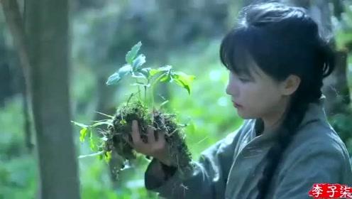 美食李子柒:诗一般的田园生活,上山搜寻天然食材,重温简朴美味!