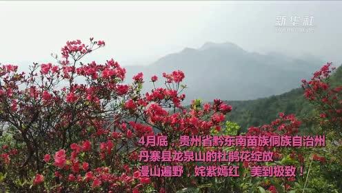姹紫嫣红 苗岭开遍映山红