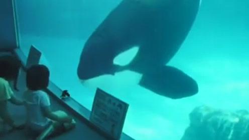 海豚想和宝宝互动,却没想到结果糗了,宝宝被逗得合不拢嘴
