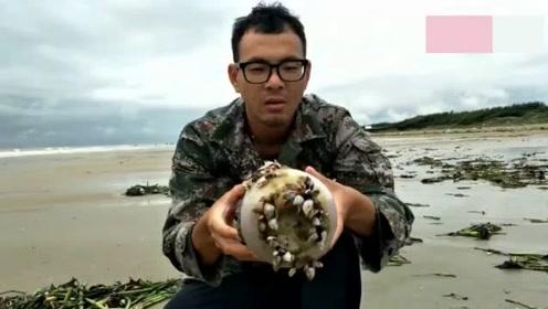 赶海发现价值千元一斤的海鲜,这下发财啦