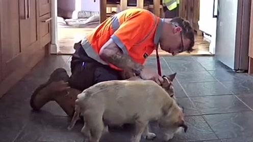 狗狗吃东西被噎窒息 主人用海姆立克法救它一命