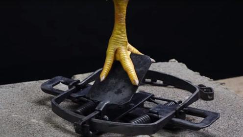为啥动物遭遇捕兽夹后无法逃脱?看鸡爪下场就懂了,太可怕了!