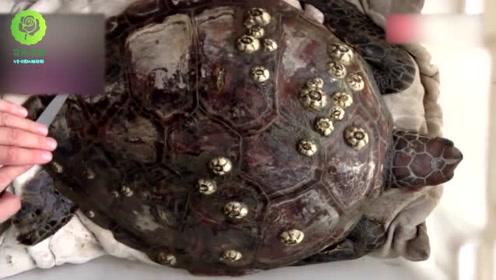 帮助海龟去除龟壳上的寄生物,强迫症患者看完已治愈