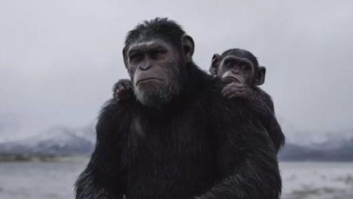 现代猿能否进化成人?科学家慌了,已有猴类迎来石器时代