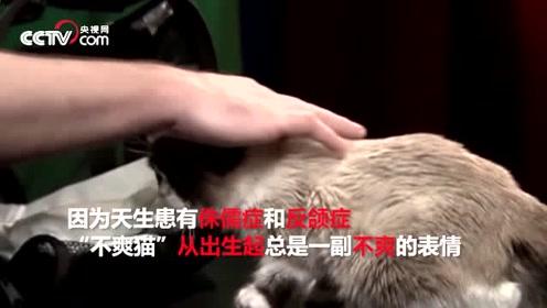 """喵星人网红""""不爽猫""""去世 狂揽1亿美元依旧""""不爽"""""""