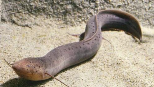 在陆地也可生存的远古鱼类,竟和人类一样长出四肢