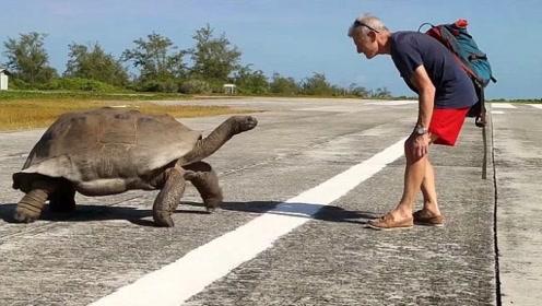 老人故意惹怒巨龟,被巨龟追着跑,网友:这也太慢了吧