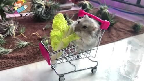 小仓鼠在主人的购物车中,乖乖的吃着大白菜,甚是可爱!