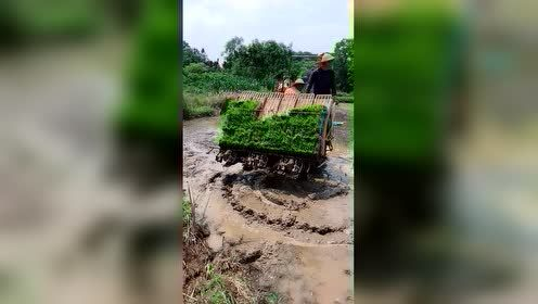 农民是真不容易啊,看着都累!