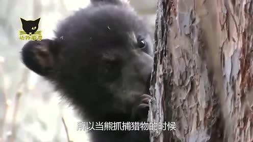 """刷三观,这头熊完美诠释了""""熊样""""一词,以后还怎么混?"""