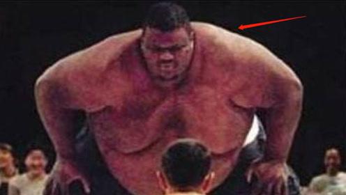 格斗与相扑的对决,还没开始就结束了!日本格斗手躺地上乖乖认输