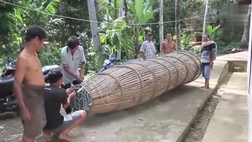 农村小伙用超大号地笼捕鱼,拉上岸后,村民眼睛都快要蹦出来了!