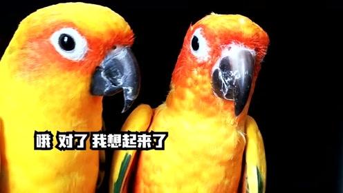 今天又让见识了,原来自恋并不是人的专利啊,鹦鹉自恋起来好可怕