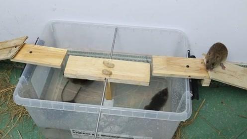哪个人才发明的这种捕鼠器,简直就是神器,对付老鼠太实用了