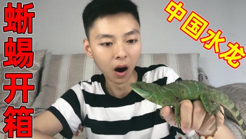 花350元买了只蜥蜴中国水龙,这只蜥蜴看起来好凶!