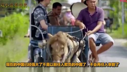 取消免签殴打中国游客,5万头牛彻底滞销:中方能不能大度一点啊
