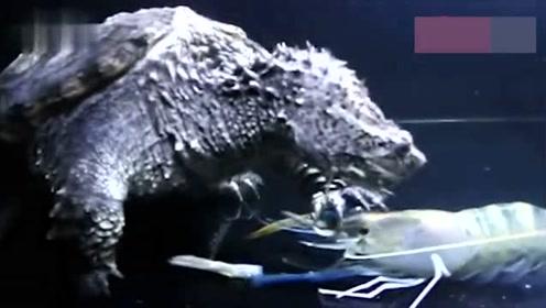 小伙钓到巨型乌龟准备放生,大爷上前一看,赶紧阻止他