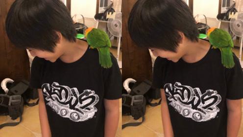 "Kimi快10岁了!陈若仪晒儿子侧脸近照被赞""好帅"""