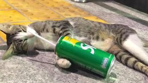 泰国曼谷现醉酒猫,抱着空饮料罐睡觉,网友:像极了喝多的我