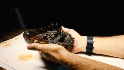 全世界最毒的鱼到底多可怕?老外作死触碰,结果悲剧发生