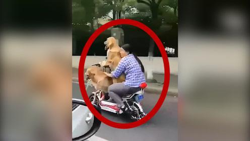 看了好几遍,确定是狗子在开车!后面女生心真大!