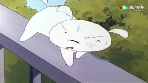 小白有对付流浪猫的特殊方法,棉花糖外加灿烂笑容太机智了