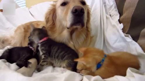 猫咪和狗狗日常真是温馨,看着都觉得很有爱啊,好想把你带回家!
